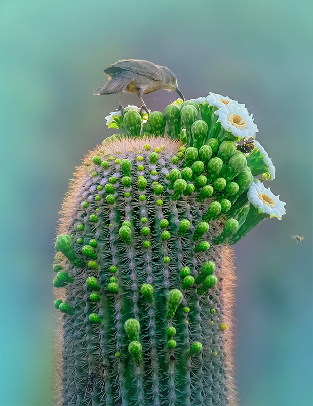 Mesa Arizona Therapist